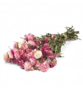 Helichrysum mazzo secco