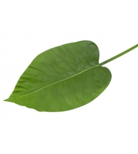 Foglia Cala verde soft touch 75cm