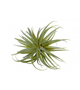 Tillandsia pianta artificiale 50x43 cm